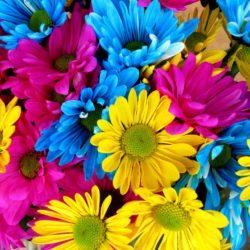 daisies-54663_1920